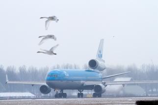 Vogels bij de startbaan