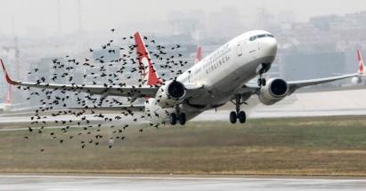 Vogels bij de landingsbaan